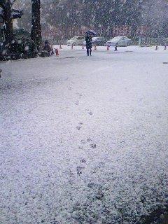 090113一宮の朝は雪模様
