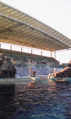バンドウイルカの一斉ジャンプの練習