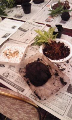 苔玉 土をこねる