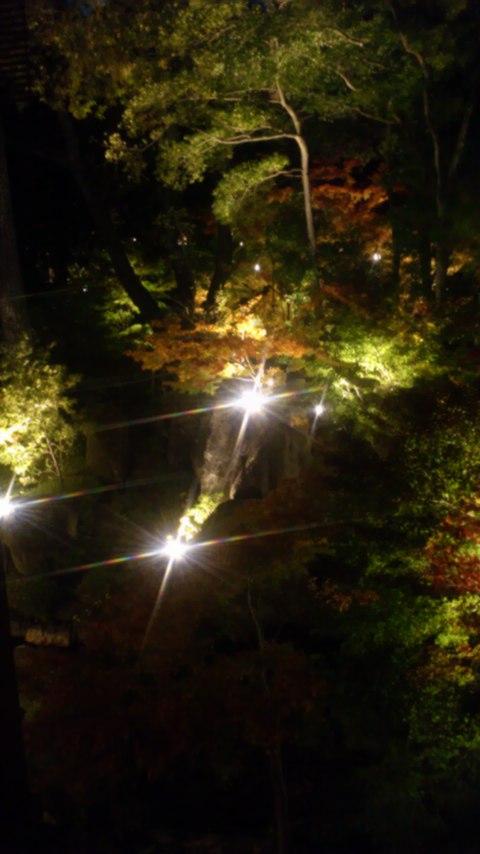 徳川園夜景2